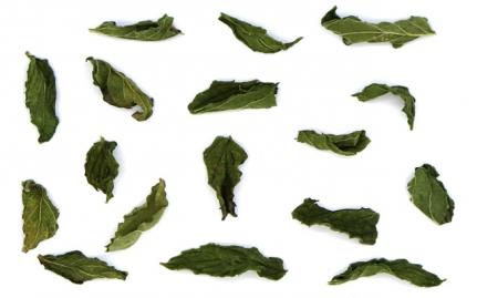 *Δυόσμος, Mentha spicata
