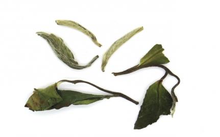 Bai Mu Dan Fujian