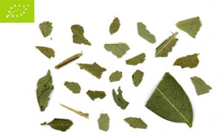 *Ευκάλυπτος, Eucalyptus globulus, bio