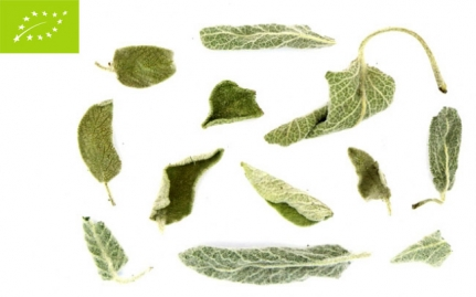 Sage, Salvia officinalis organic