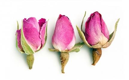 Rose Buds, Rosa gallica