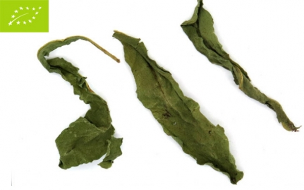 *Ταραξάκο, Taraxacum officinale, bio