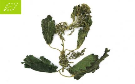 *Τσουκνίδα, Urtica dioica, bio