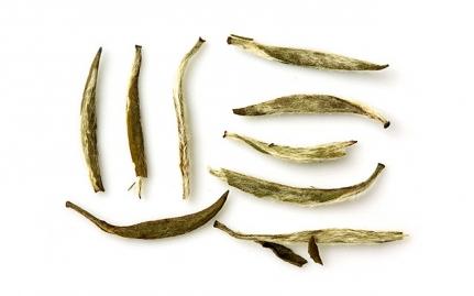 Yin Zhen