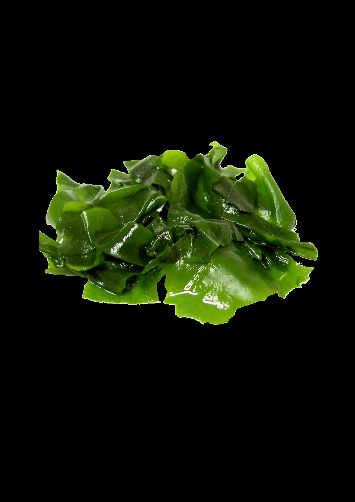 Φύκια Wakame